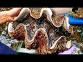 Makanan jalanan Jepang - $100 dolar Amerika Kerang Besar Jepang makanan laut