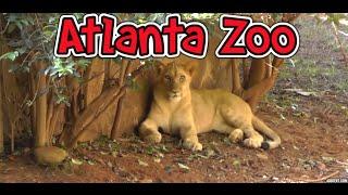 Atlanta Zoo HD 1080p