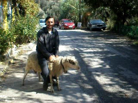REAL SHEEP RIDING IN AZOGIRES PART 3