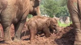 Baby Elephant Dok Rak Outing