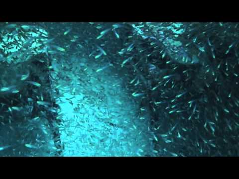 Biak Papua Catalina Wreck Dive ITK IPB