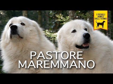 PASTORE MAREMMANO trailer documentario
