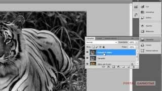 Como transformar uma foto em desenho - Adobe Photoshop CS5