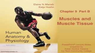 Anatomy & Physiology Chapter 9 Part B Lecture: Muscles & Muscle Tissue