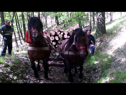 Cu caii la padure