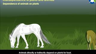 INTERDEPENDENCE OF  PLANTS  AND ANIMALS