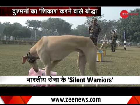 Xxx Mp4 First Time Ever Indian Breed Dogs Become Part Of Indian Army 3gp Sex