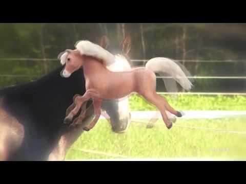 Robot Chicken: Fuck a horse