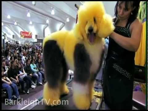 Barkleigh's Creative Styling Contest (extreme colored dogs)