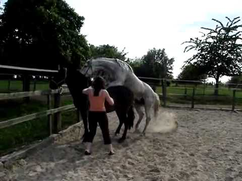 Xxx Mp4 حصان يزاوج فرس سبحان الله 3gp Sex