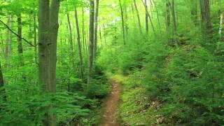 Forest Energy Guided Meditation - Binaural ASMR