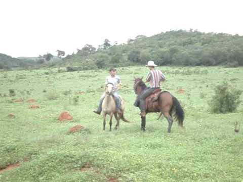 cavalo inteiro querendo montar na égua com cavaleiro montado