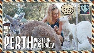 Perth 🇦🇺WEEK 39. We got to feed KANGAROOS!! 😍