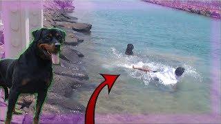 🛑 مقلب الكلب في مؤيد!! غرق في البحر هو والكلب!