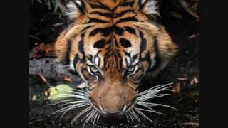 Survivor - Eye of the Tiger  [HQ]