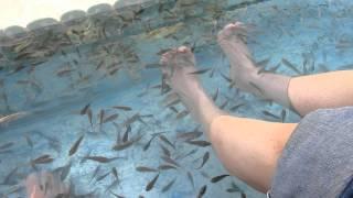 Cambodian Fish Foot Massage in Siem Reap