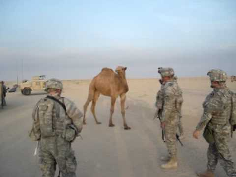 Camel vs Soldiers