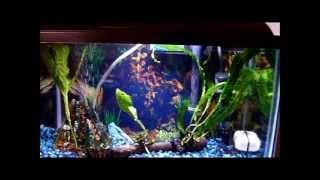 Java Fern: My First Live Aquarium Plant + How To
