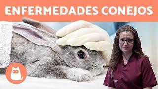 Las enfermedades de los conejos más comunes