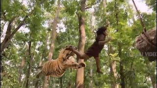The boy defeats the tiger to avenge his father - Mohanlal Power Packed Telugu