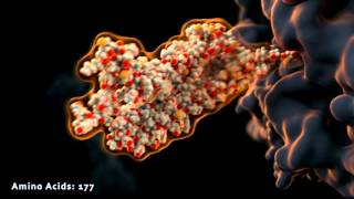 Scientific animation: protein production and folding