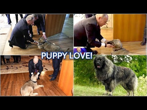 Xxx Mp4 NEW PUPPY Putin Gets Sarplaninac Puppy Serbian Shepherd Dog During Visit To Serbia He Is Cute 3gp Sex