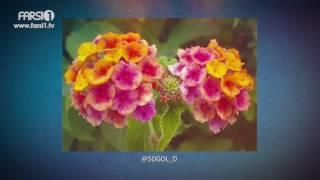 FARSI1- My Iran 65/ فارسی1 – ایران من – شماره ۶۵
