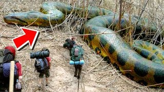 HUGE SNAKES AND ALLIGATORS MEET THE BOY SCOUTS!!   BRIAN BARCZYK