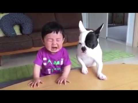 Xxx Mp4 Whatsapp Funny Videos 2017 Most Funny DOG AND KIDS Videos 2017 3gp Sex