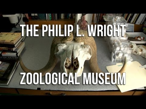 The Philip L. Wright Zoological Museum