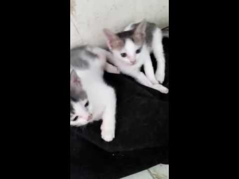 Xxx Mp4 Cute Cat Must Watch Full HD 3GP And MP4 Video Download 3gp Sex