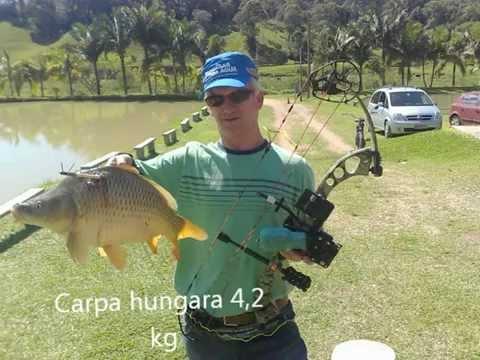 Pesca de carpa com arco e flecha PSE Archery.