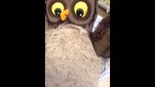 Peek-a-boo! Ikea owl