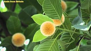 Badal o Diner prothom o Kodom o Phul by Aditi Mohsin (Rabindra Sangeet)