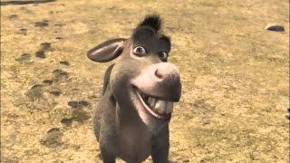 2kmtcentral Draft Ep.34 Amy Draymond Green = Donkey from Shrek