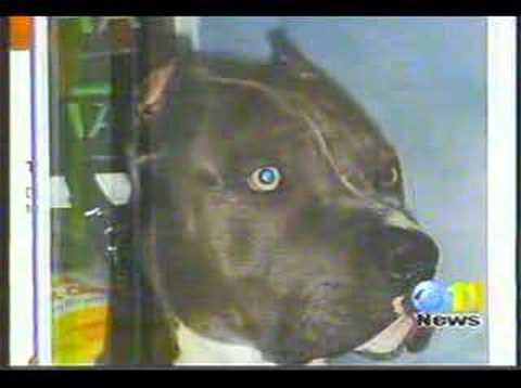 Illegal dogfights in Alaska