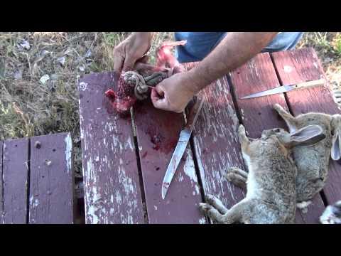 Destripando Conejo parte I