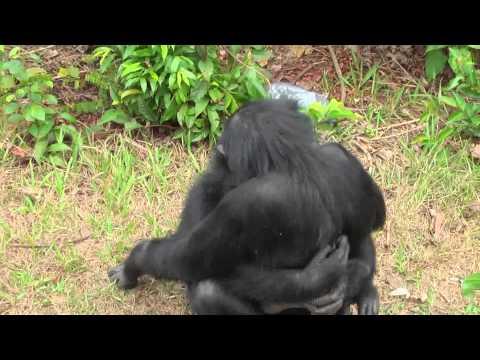 Любовь обезья� искре� � а и проста