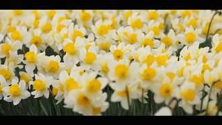[한국인이 사랑하는 명시] 정의송-꽃