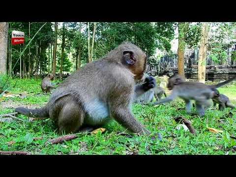 Xxx Mp4 Funny Sweetpea Does Great Job Today Youlike Monkey 3gp Sex