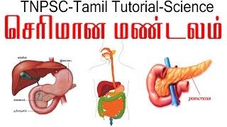 TNPSC Tamil Tutorial || Digestive System