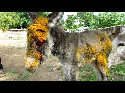 Xxx Mp4 Injured Baby Donkey Rescued Watch Her Mama 39 S Reaction 3gp Sex
