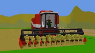 Farm Work | Combine Harvester - Rape harvest | Kombajn i Traktor dla dzieci - zbiór Rzepaku