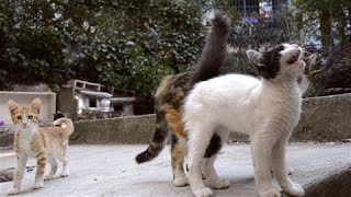 In Istanbul the Cats Are King