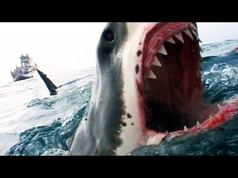 Naked Science Shark Attacks