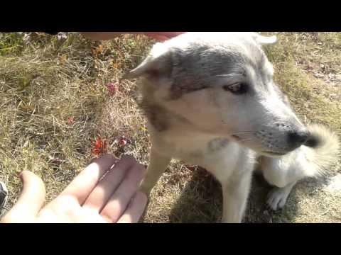 実家に帰ったら野良犬が懐いてた。friendly dog. love
