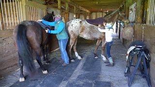 Tacking up Horses Blindfolded!