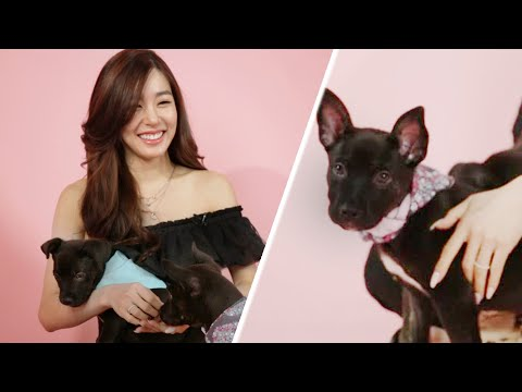 Tiffany Young Plays With Puppies While Answering Fan Questions