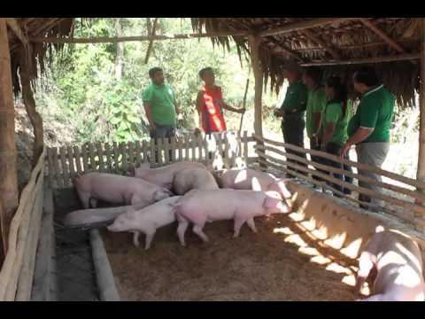 Babuyang Walang Amoy in Ilocos Sur Ilocos Norte Abra and La Union II