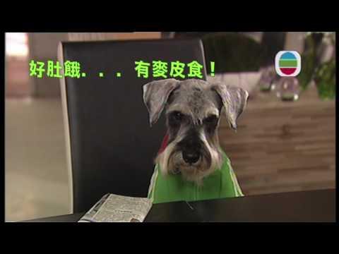 TVB 有營煮婦 Jack仔想偷食麥皮 TVB Channel